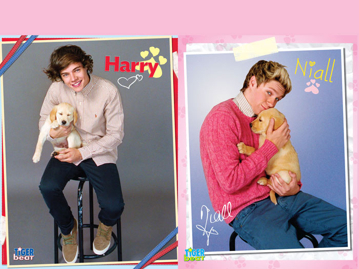 which 1d hottie s tiger beat puppy poster wins tbt tigerbeat