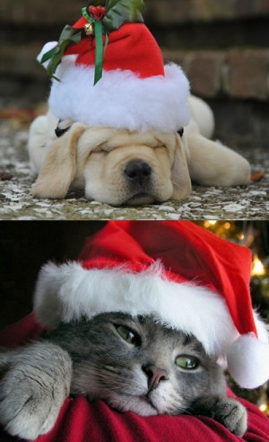 POLL: Holiday Puppy, or Kitten?