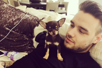 Quiz: Which Cute Boy With a Cute Puppy Do You Need in Your Life?