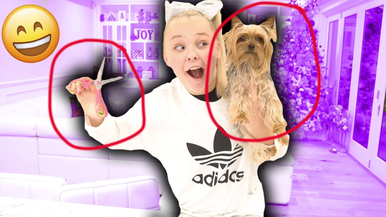 I Kidnapped Jojo Siwa S Dog Jojo Called Me Bow Bow Is Mine